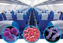 Uçak Yolculuğunda Hastalık Kapmayın. Konforlu Bir Seyahat İçin Ne Yapmalı?